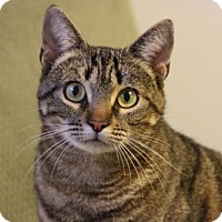 Adopt A Pet :: Mia - Potomac, MD