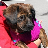 Adopt A Pet :: Minnie - Richmond, VA