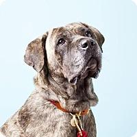 Adopt A Pet :: Hera - Brooklyn, NY