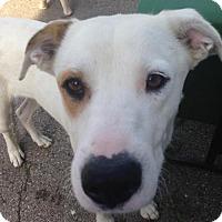 Adopt A Pet :: Jake - Grafton, WI
