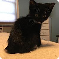 Adopt A Pet :: Coraline - Phillipsburg, NJ