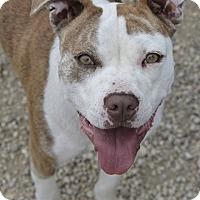 Adopt A Pet :: Juliet - Meridian, ID