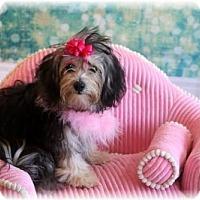 Adopt A Pet :: Anna - Dallas, TX