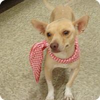 Adopt A Pet :: Gertie - Las Vegas, NV