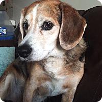 Adopt A Pet :: Ernie - Savannah, GA