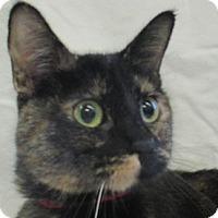 Adopt A Pet :: Candy - Lloydminster, AB