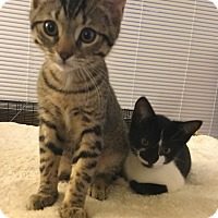 Adopt A Pet :: Summer & Winter - Ardsley, NY