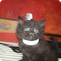 Adopt A Pet :: *HERMIONE - Bakersfield, CA