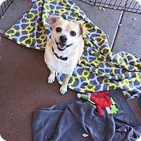 Adopt A Pet :: Sammie - Peoria, AZ