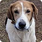 Adopt A Pet :: Wesley