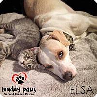 Adopt A Pet :: Elsa - Council Bluffs, IA