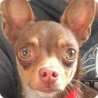 Adopt A Pet :: Saya - Visalia, CA