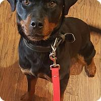 Adopt A Pet :: Eden - Oakland, MI