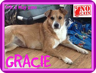 Wirehaired Fox Terrier/Terrier (Unknown Type, Medium) Mix Dog for adoption in Manchester, New Hampshire - GRACIE