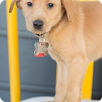 Adopt A Pet :: Rockledge - Broomfield, CO