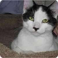 Adopt A Pet :: Gunther - Terre Haute, IN