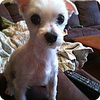 Adopt A Pet :: Hansel - Columbia, SC
