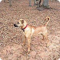 Adopt A Pet :: *JESSIE - Winder, GA