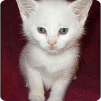 Adopt A Pet :: Kerby - Richmond, VA