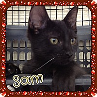 Adopt A Pet :: Sam - Bradenton, FL