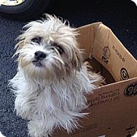 Adopt A Pet :: Lila - Hazard, KY