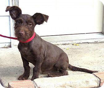 random photos medium size dog breeds cute toy dog breeds shepherd dog ...
