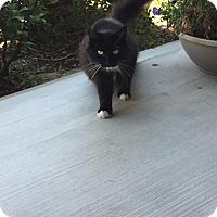 Adopt A Pet :: Maggie - San Jose, CA