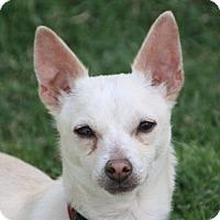 Adopt A Pet :: Apollo - Edmonton, AB