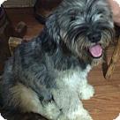 Adopt A Pet :: GRISSOM in Rhode Island