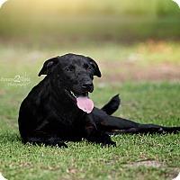 Adopt A Pet :: Ruger - Daleville, AL