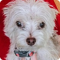 Adopt A Pet :: Mitsey - Moreno Valley, CA