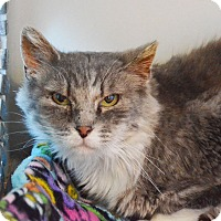 Adopt A Pet :: Cersei - Lincoln, NE