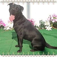 Labrador Retriever Mix Dog for adoption in Marietta, Georgia - NAOMI-see video