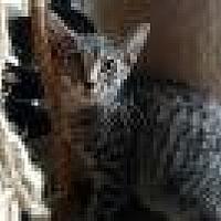 Adopt A Pet :: Rambler - Shelbyville, KY