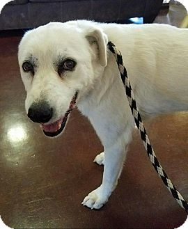 Labrador Retriever Mix Dog for adoption in Newcastle, Oklahoma - Elsa