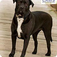 Adopt A Pet :: BobaFett - Salt Lake City, UT