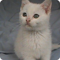 Adopt A Pet :: Cotton - Maynardville, TN