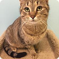 Adopt A Pet :: Sammy - Newburgh, IN