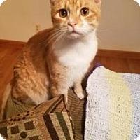 Adopt A Pet :: Mason-Fostered - Rustburg, VA
