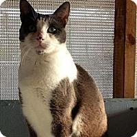 Adopt A Pet :: mary - Redondo Beach, CA