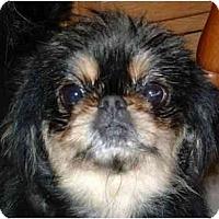 Adopt A Pet :: Nori-NY - Mays Landing, NJ