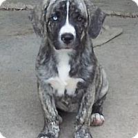 Adopt A Pet :: Victoria - Adamsville, TN