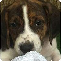 Adopt A Pet :: Trout - Orlando, FL