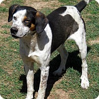 Beagle Mix Dog for adoption in Waldron, Arkansas - Tom Bob