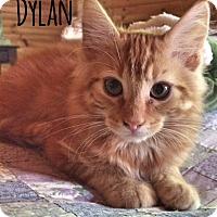 Adopt A Pet :: Dylan - McDonough, GA