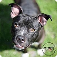 Adopt A Pet :: Penny - Lyons, NY