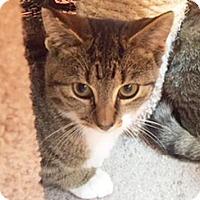 Adopt A Pet :: Aletta - Hudson, NY