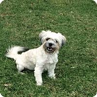 Adopt A Pet :: Cecelia Hart (Cici) - Austin, TX