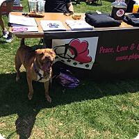 Terrier (Unknown Type, Medium) Mix Dog for adoption in Essington, Pennsylvania - Banu