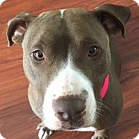 Adopt A Pet :: Leia - Tucson, AZ
